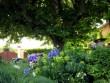 Un jardin pour contempler et s'émerveiller