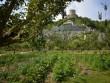 Jardin fruitier du château de la Roche-Guyon - Val-d'Oise
