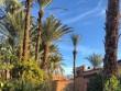 Une palmeraie à la végétation luxuriante
