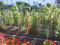 Palmarès 2009 du concours national des jardins potagers