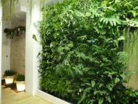 Les murs végétaux se donnent en spectacle