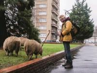 L'agriculture urbaine, espoir pour la ville de demain ?