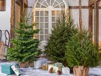 Bien choisir son sapin de Noël naturel