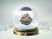 16 décembre : un terrarium design pour une note tropicale