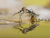 Eloigner les moustiques : conseils et solutions naturelles