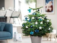 Louer son sapin de Noël : mode d'emploi