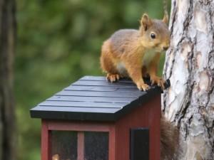 8 abris pour attirer les animaux au jardin
