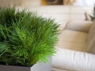 Des plantes belles et vertes sans entretien