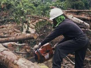 Un nouveau réseau WWF pour exploiter le bois durablement