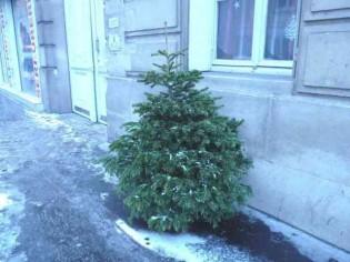 Que faire de mon sapin de Noël après les fêtes ?