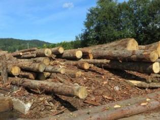 Le bois illégal sous surveillance européenne