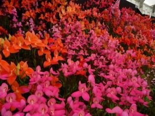 Hampton court Flower show : au coeur des jardins anglais
