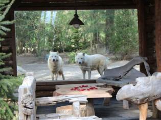 Dormez face aux loups et aux ours polaires...
