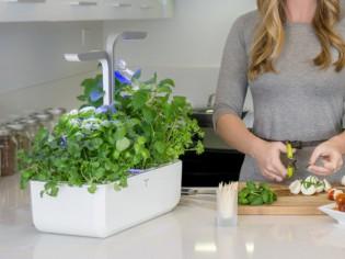 Dix accessoires pour prendre soin de ses plantes pendant les vacances