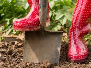 3,2 millions de Français ont fait appel à un professionnel pour aménager leur jardin