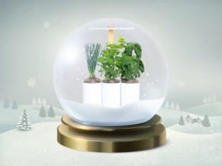 15 décembre : un potager intérieur pour jardiniers en herbe !