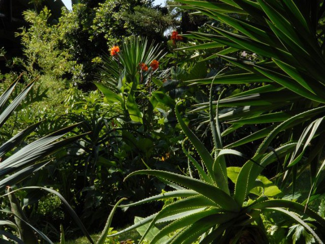 jungle fashoda