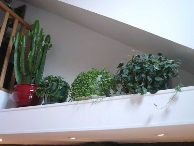 niche plantes steph et charles