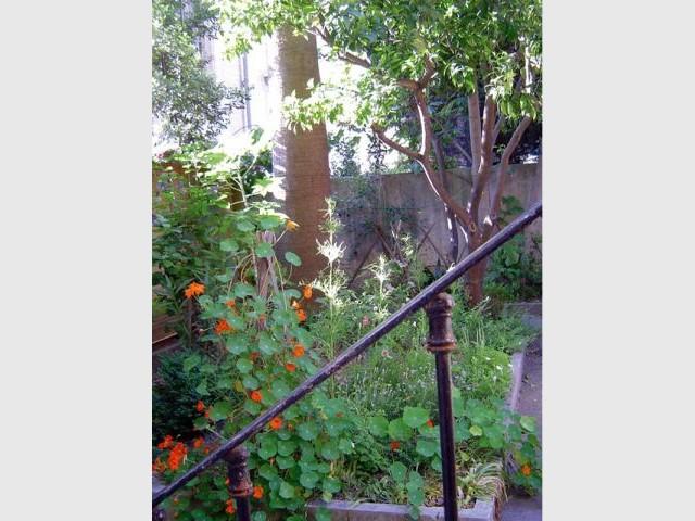 moma jardin