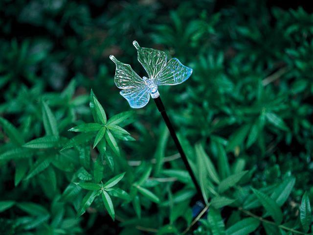 Papillon - Shopping solaire nature & découverte