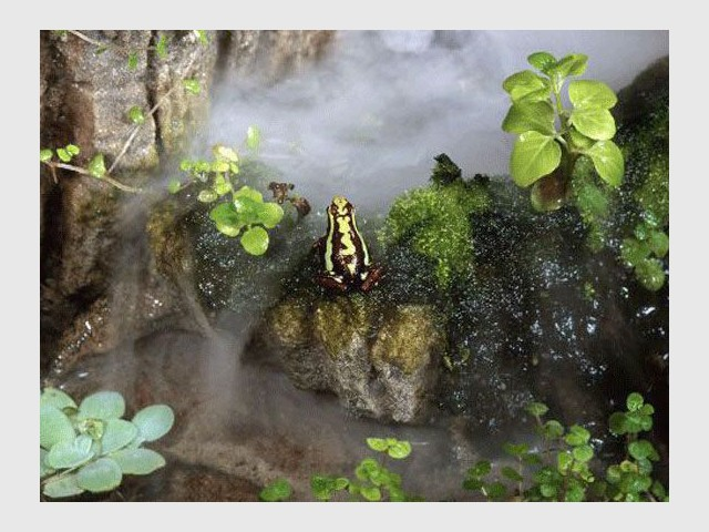 Ecosculpture grenouille