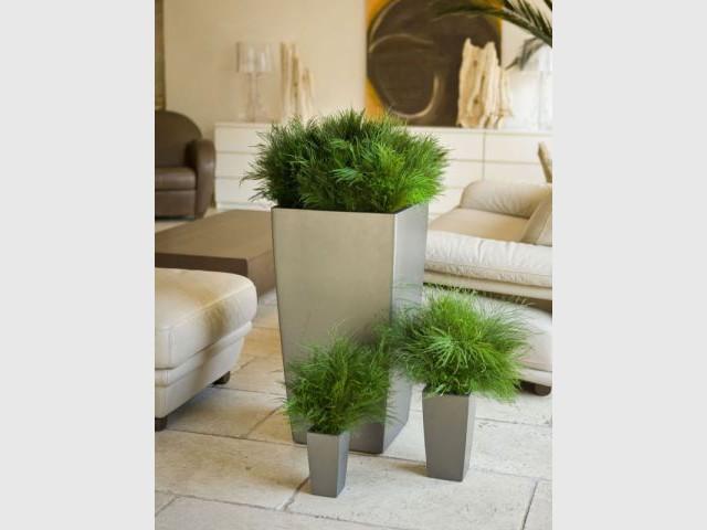 Plantes stabilisées - Meamea
