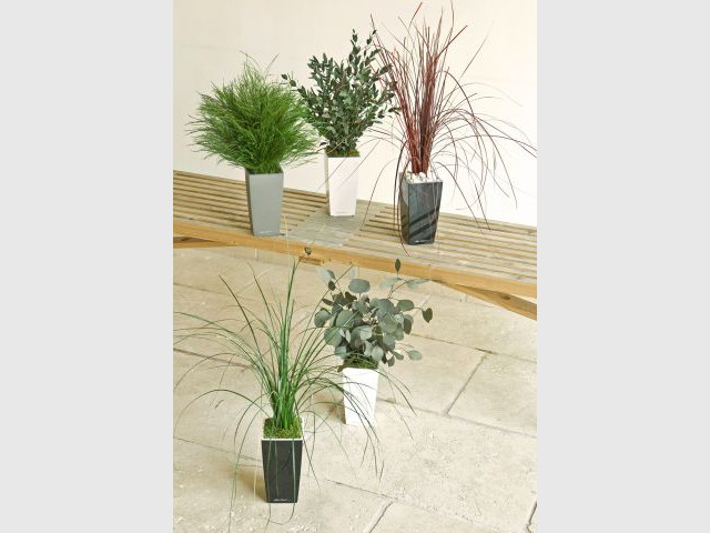 Composition - Plantes stabilisées - Meamea