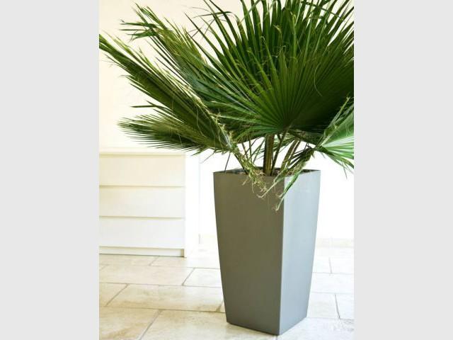 Des plantes belles et vertes sans entretien for Plante verte exterieur sans entretien