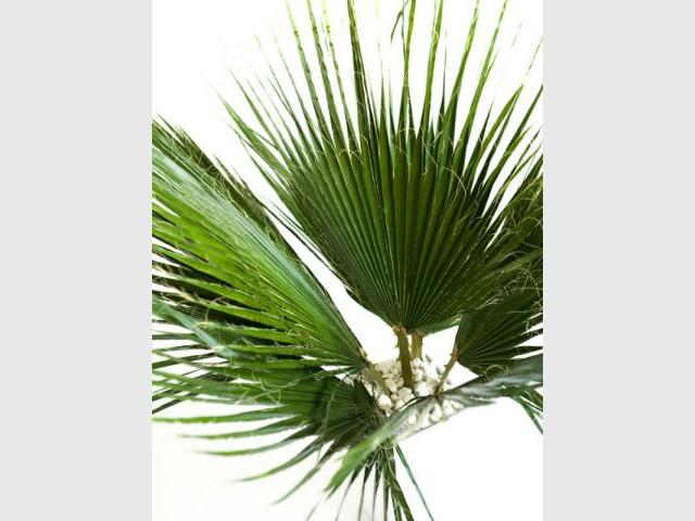 Détail feuille - Plantes stabilisées - Meamea