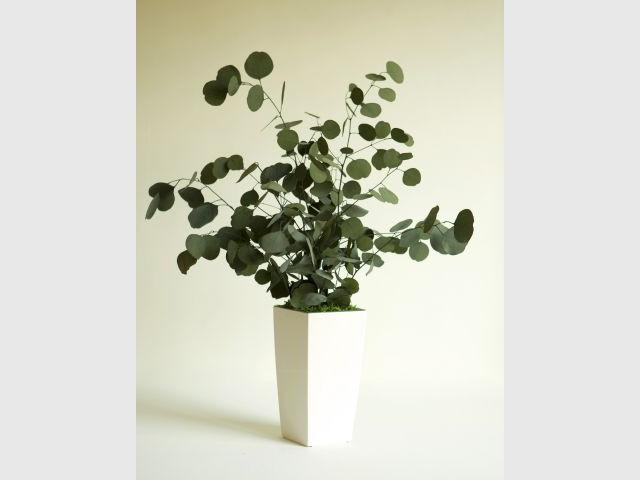 Plantes stabilisées Meamea