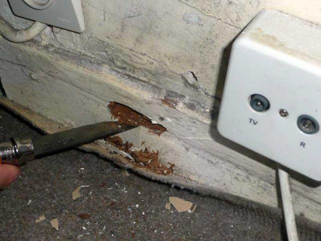 Plinthe abimée - Diagnostic termites état parasitaire