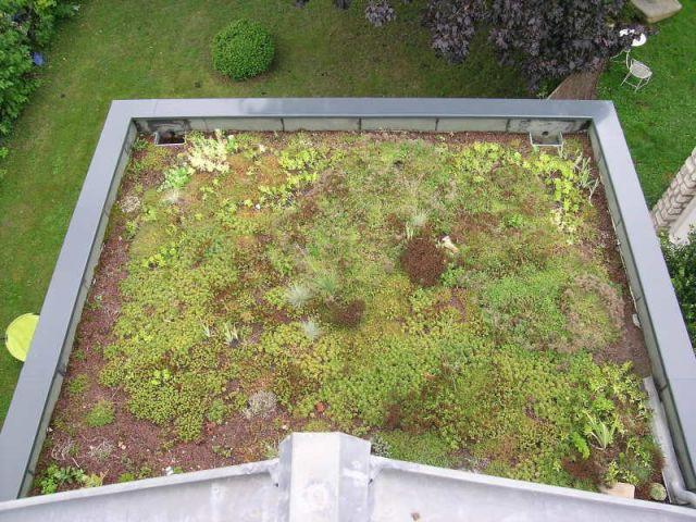 terrasse végétale végétation reportage