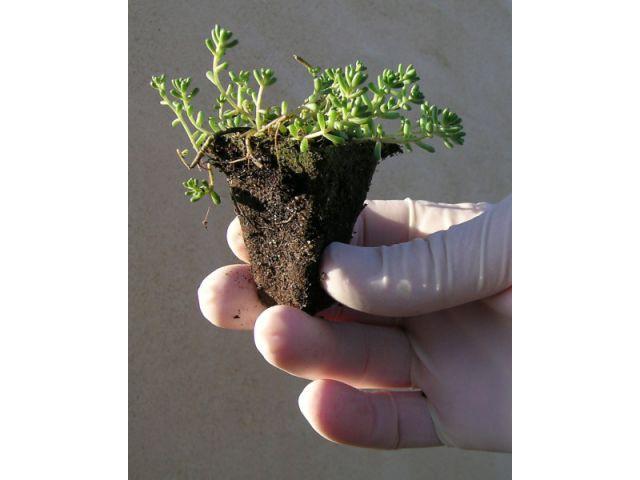 Etape 5 : Plantation 1/3 - Toit terrasse végétalisé - étape par étape