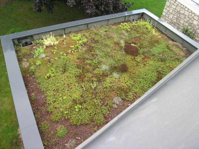 Toit végétal terrasse
