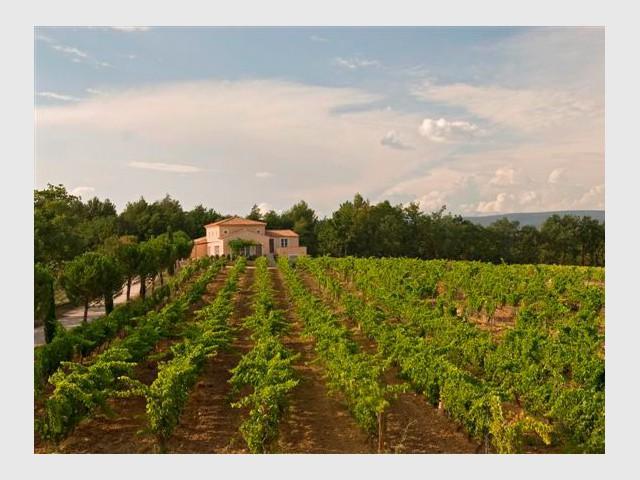 Les vignes - Domaine la Coquillade