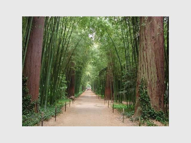 La bambouseraie de Prafrance - Jardins de France