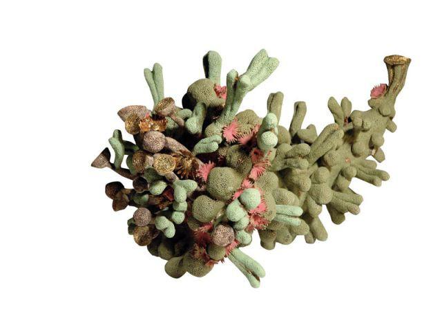 Green Cornucopia