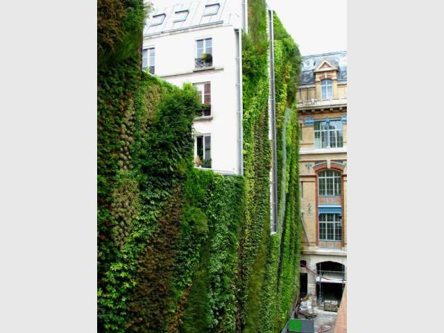 Patrcik Blanc - Le Mur Végétal
