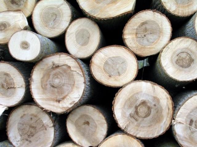 bois découpé