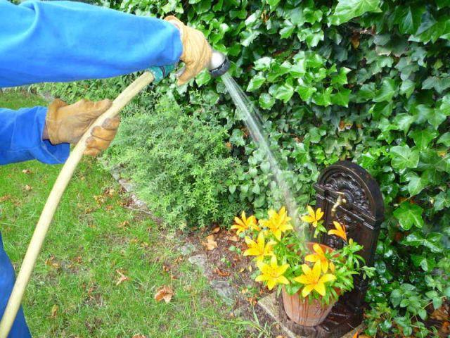 Arroser son jardin les bons gestes - Arrosage jardin ...