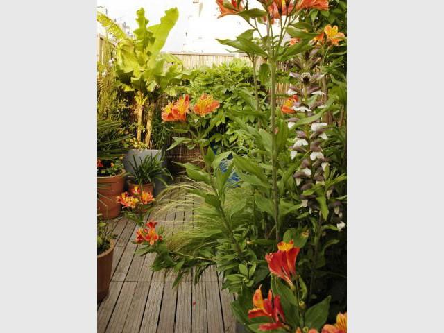 Plantes méridionales - Reportage terrasse sur les toits de Paris - Sabz