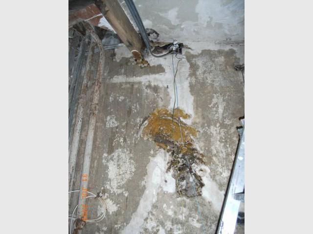 Mérules et champignons - Appartement infesté mérules