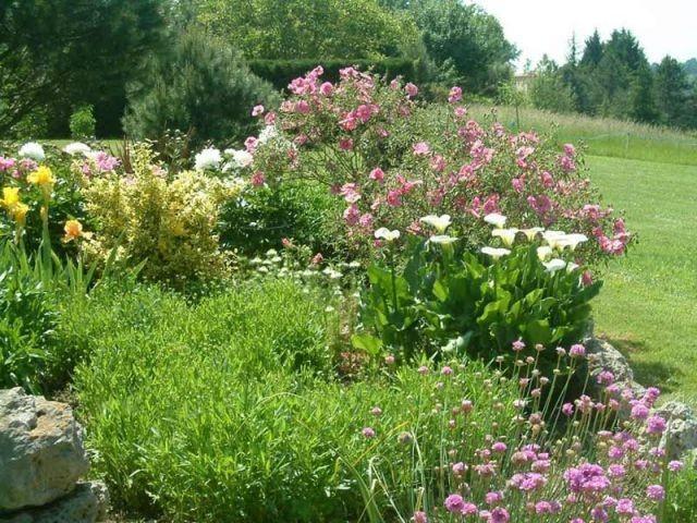 Palmar s du concours de photos plantes vivaces for Prix plantes vivaces