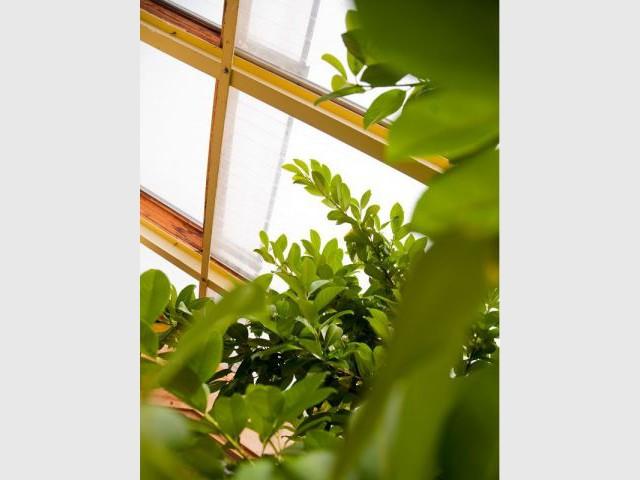 Des végétaux - Maison bio solar