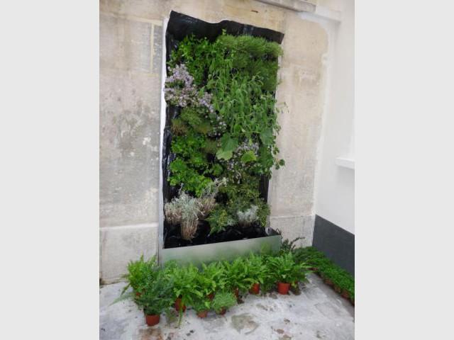 Potagers urbains - Murs végétaux - Les Jardins de Babylone