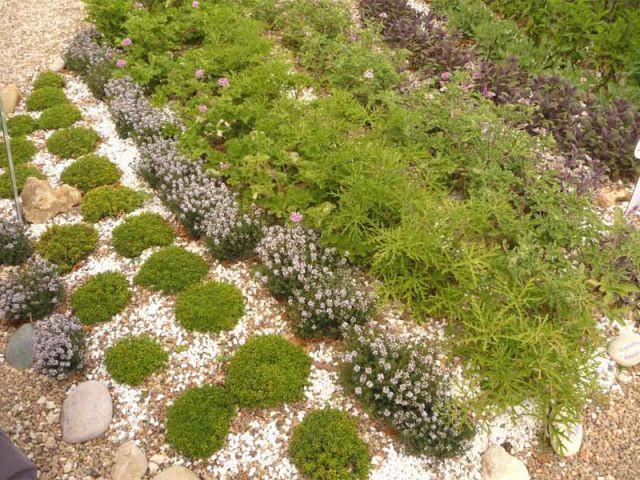 JardiNez, vagabondage aromatique - jardin de Chaumont sur Loire
