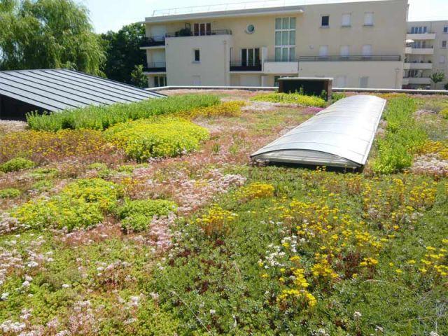 Végétalisé - Toit-terrasse