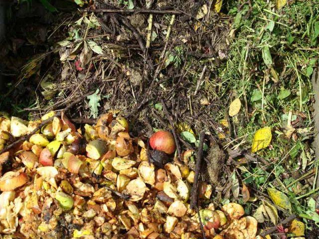 Jardin automne compost