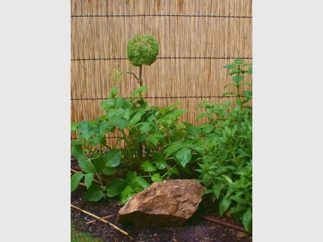 Plantes d'ombre - Reportage - un jardin urbain