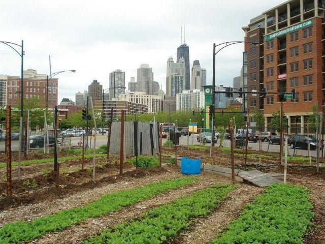 Ferme urbaine à Chicago